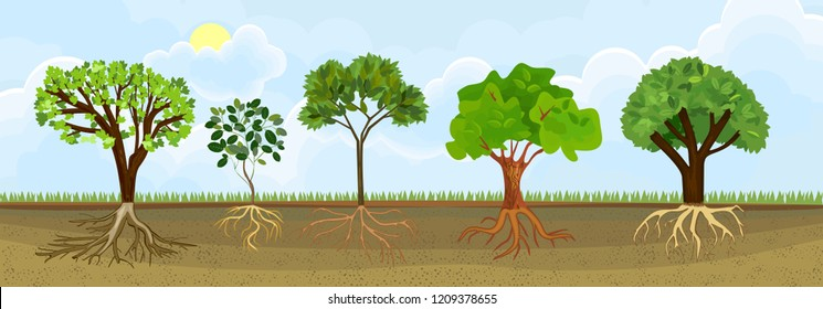 Set of different cartoon deciduous trees with green crown and root system. Plants showing root structure below ground level