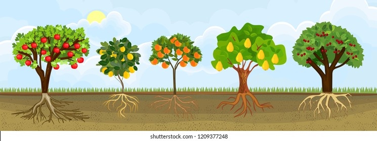 Set of different cartoon fruit trees with ripe fruits and green crown in garden. Plants showing root structure below ground level