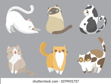 Set of different cats breeds in different poses with on grey background. Pets concept cartoon character design. Vector illustration.