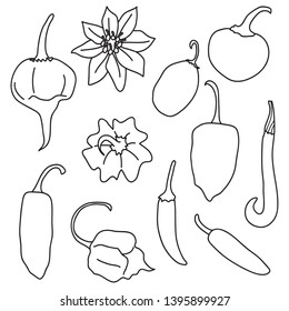 Set of different chilli peppers and flower. Coloring book page illustration.