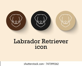 Set of different colors of Labrador Retriever face, front view : black, fawn, brown. line icon characters in flat style