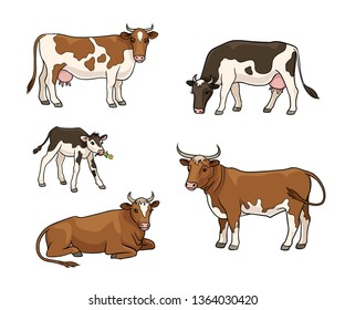 Set of different cows, ox and calf. Vector illustration. EPS8