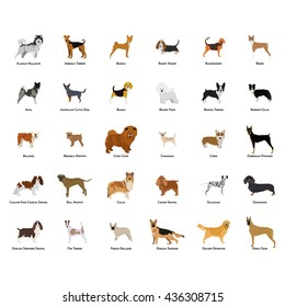 Set of different dog breeds on a white background