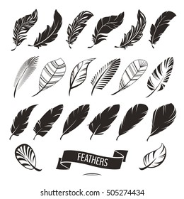 Set of different feathers vector illustration