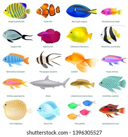 A set of different fish, colorful three-dimensional, with the name, vector illustration