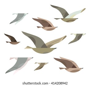 Set of different flying birds. Vector illustration