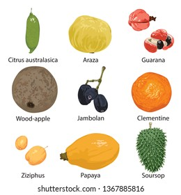 Set of different fruits on a white background.
