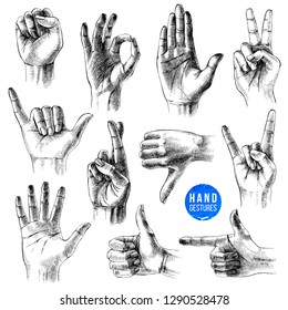 Set of different gestures. 11 hand drawn hands on white background. Vector illustration