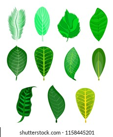 Set of different green leaves on nuts. Set of nuts: nutmeg,macadamia,cashew,pistachio,almond,hazelnut,pecan,peanut,coconut,walnut,brazilian,cedar,pine nut. Cartoon. Green leaf of tree,plant,fern,palm