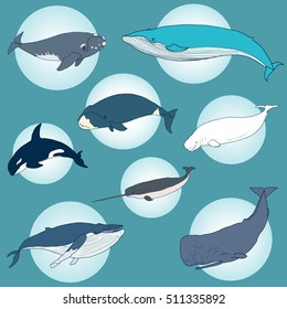 Set of different hand drawn whales. Vector illustration of marine mammals, isolated on blue background. Sea animal collection. Orca, narwal, cachalot.