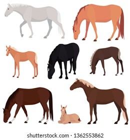 Set of different horses, various colors and poses. Herd of grazing horses, mares, stallion, foals