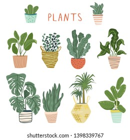 Set of different house plants in cute pots