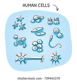 Set of different human cells for medical info graphics, nerve, bone, epithelial, muscle, blood, stem, sperm, oocyte. Hand drawn cartoon sketch vector illustration, marker coloring on blue background.