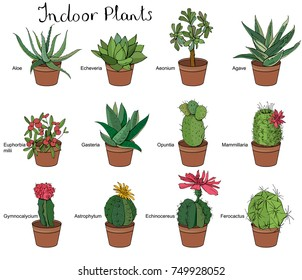 Set of different indoor succulent plants. Typical tropical  flowers and cactus used in room decoration isolated on white background.