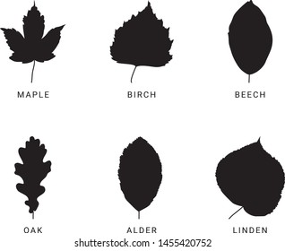 Set of different leaves, silhoutte, black and white