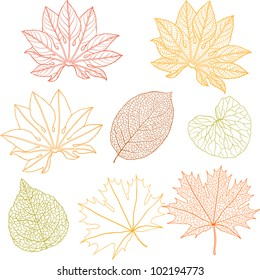 Set of different leaves. A vector illustration.