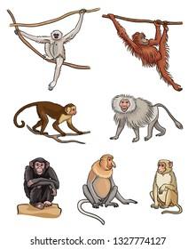 Set of different monkeys. Vector illustration.