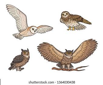 Set of different owls in color. Vector illustration. EPS8