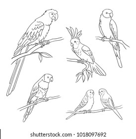 Set of different parrots in contours. Vector illustration. EPS8