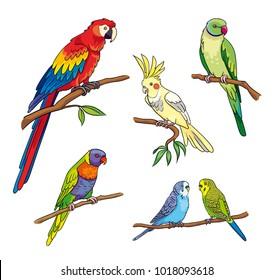 Set of different parrots. Vector illustration. EPS8