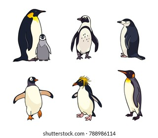 Set of different penguins. Vector illustration. EPS8
