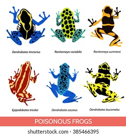 Set of different poisonous frogs. Vector illustration of poisonous frogs on a white background.Set of isolated frogs. Frog clip-art. Dyeing dart frog. Blue poison dart frog. Phantasmal poison frog