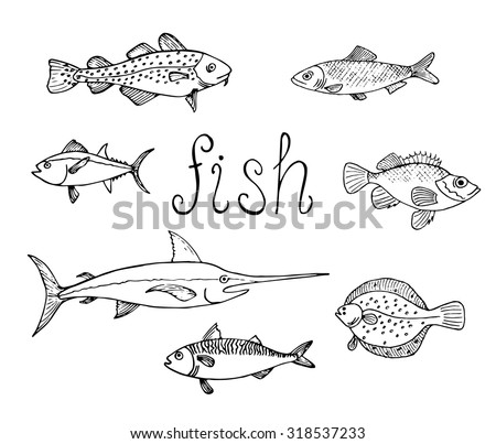Set Different Sea Fish Herring Cod Stock Vector (Royalty ...