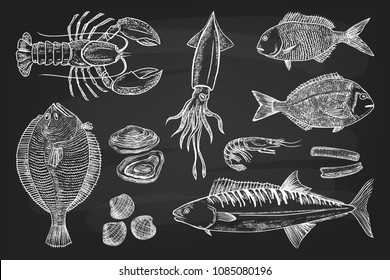 Set different Seafood: Lobster, Squid, Pagrus, Flounder, Mussels, Oysters, Mackerel, Shrimp, Mackerel. Vector illustration draw with chalk