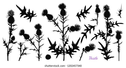 Set of different silhouettes of thistle.  Vector black and white illustration.  Hand-drawn herbs. Clipart.