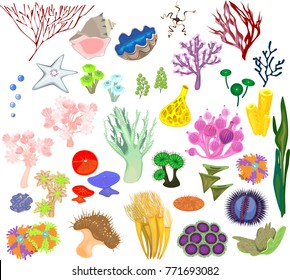 Set of different species of soft corals and marine invertebrates