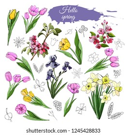 Set of different spring flowers: tulip, iris, narcissus, malus and doodle elements. Hand drawn colored  sketch  for greeting card, invitation. Vector illustration isolated on white background.