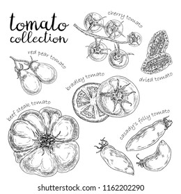 Set of different tomato. Hand drawn graphic. Vintage style.