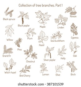 Set of different  tree branches. Hand drawn vector illustration