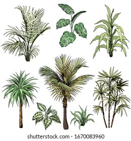 Set of different tropical palm leaves and trees. Hand drawn vector illustration. Isolated element for design.