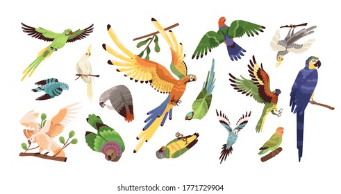 Set of different tropical parrots vector illustration. Collection of colored birds with feathers and wings isolated on white. Exotic creature with beak flying, eating and sitting on branch