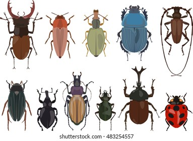 Set of different types of bugs and beetles isolated on white background in flat style.  Detailed illustration bugs and beetles. Collections of insects. Vector illustration.