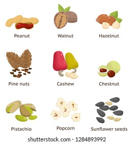 Set of different types of nuts. Sunflower seeds, hazelnuts, pistachios, macadamia, pecan, coconut and others.