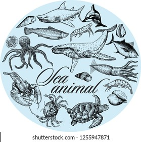 Set of different types of sea animals illustration. Graphic sea life collection. Vector ocean creatures isolated on a blue background.