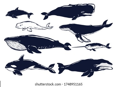 Set of different types of whales isolated on white. Dolphine, blue whale, fin whale, humpback, beluga,sperm whale,bowhead whale,orca. Vector illustration.