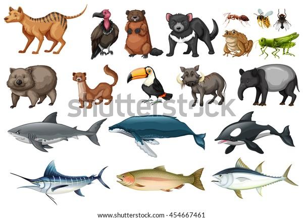 Set Different Types Wild Animals Illustration Stock Vector ...