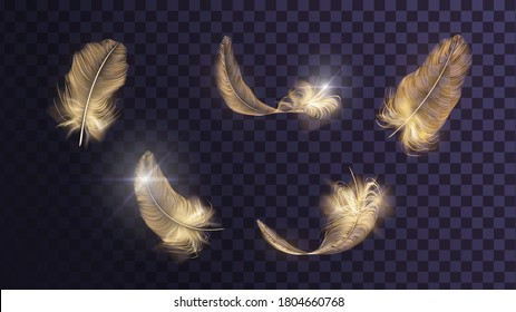 Set of different vector golden feathers on a transparent background