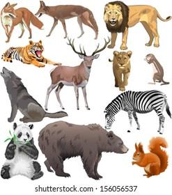 set of different wild animals. Vector illustration