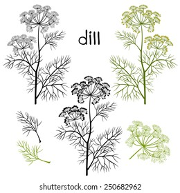 Set of dill  isolated on white background. Hand drawn vector illustration, sketch. Elements for design.