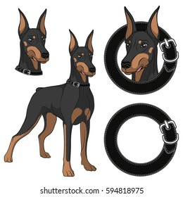 Set of Doberman colored illustrations in a collar. Isolated vector objects on white background.