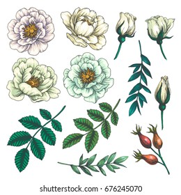 Set of dog rose. Vintage botanical hand drawn illustration of briar flowers, buds, berries and leaves. Vector engraved color natural elements. Sketch style.