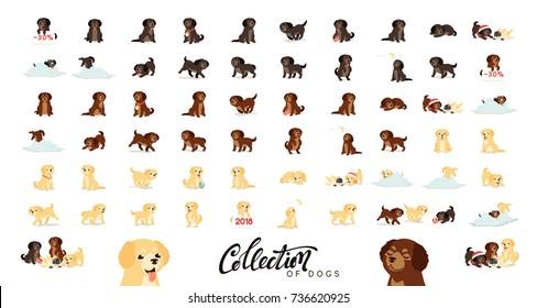 Set of dogs labrador and golden retriever.