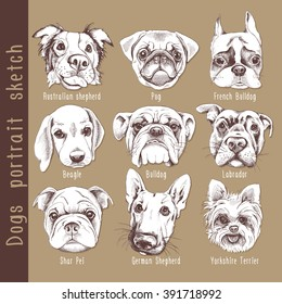 Set of dogs portrait sketch. Vector illustration.