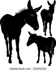 set of donkeys silhouettes isolated on white background