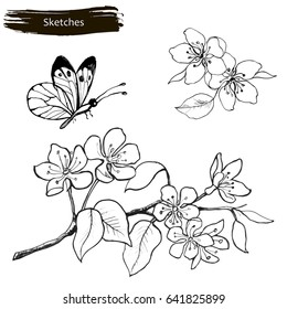 Set drawing by hands of spring flowers. A branch of blossoming cherry, pear and butterfly.