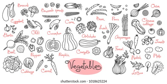 Set drawings of vegetables for design menus, recipes and packages product. Vector Illustration.